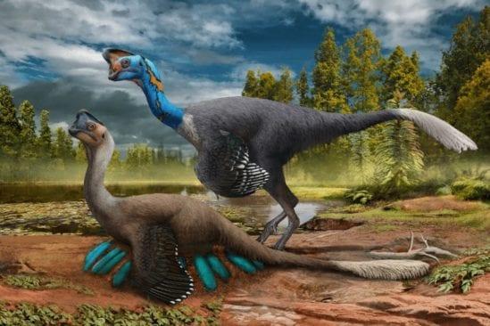 fossile nid oviraptor