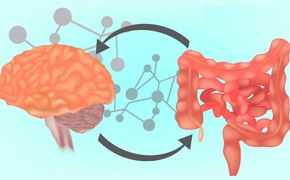 microbiote intestinal serait implique traits sagesse solitude