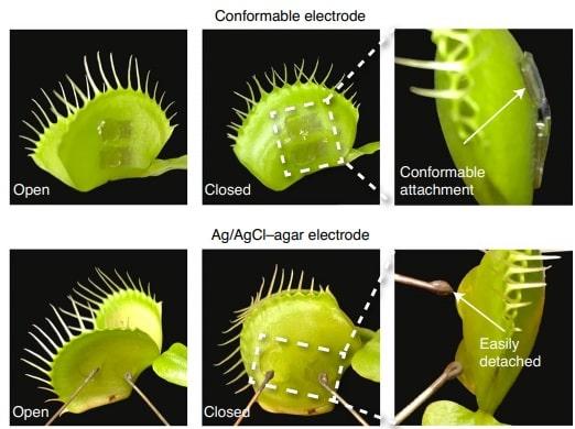 photo type electrode plante