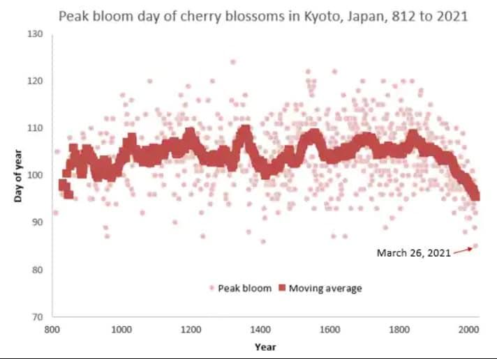 pic floraison cerisiers Kyoto