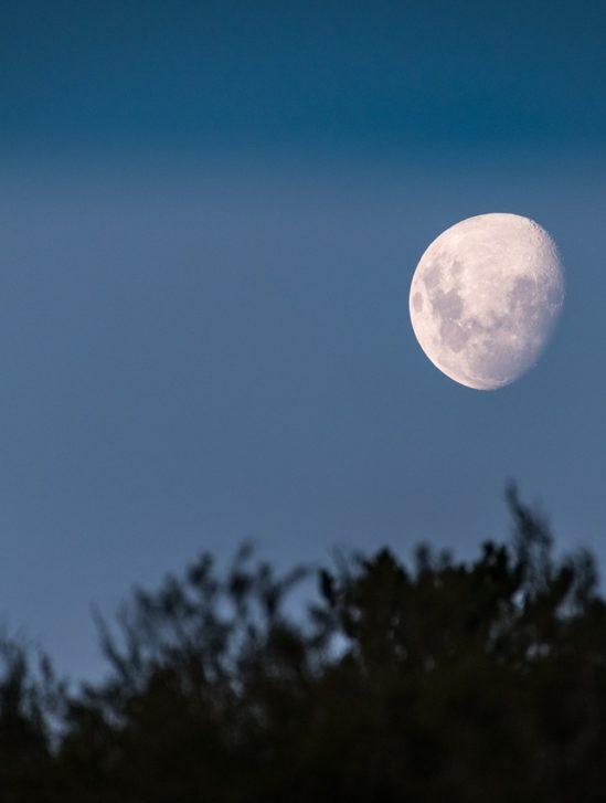 projet arche lunaire sauvegarde espèces