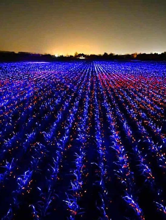 systeme eclairage bleu uv stimulation cultures projecteurs