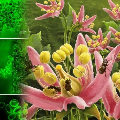 chercheurs decouvrent dernier repas pollinisateur cretace