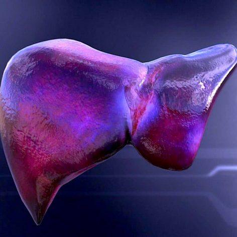 chercheurs mettent au point technique permettant produire foies transplantables en laboratoire