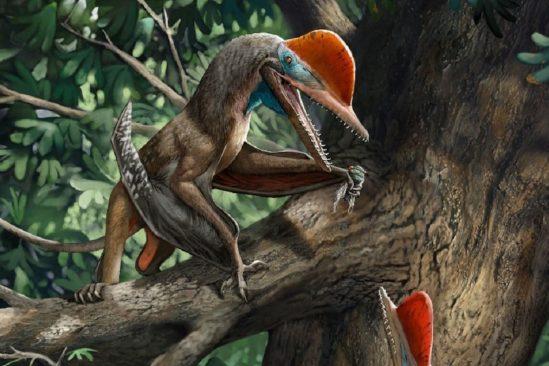decouverte pterosaure jurassique dote pouces opposables