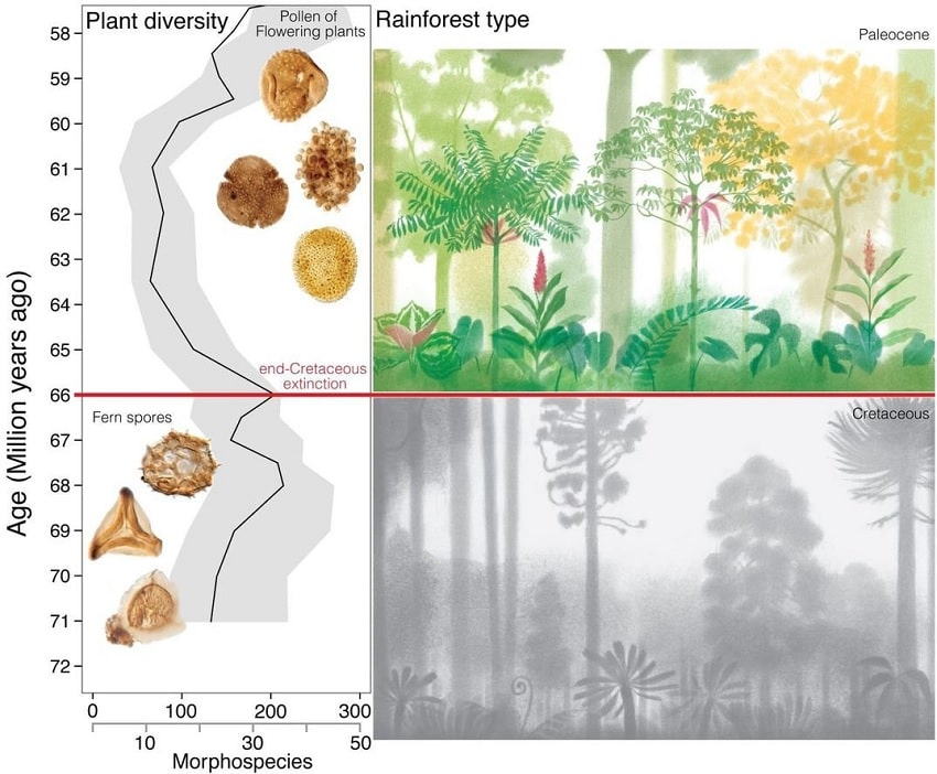 differences forets cretace paleogene