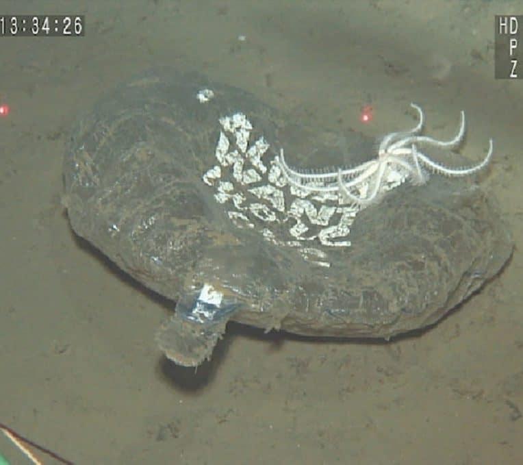 plastiques usage unique recouvrent majoritairement fond ocean pacifique nord