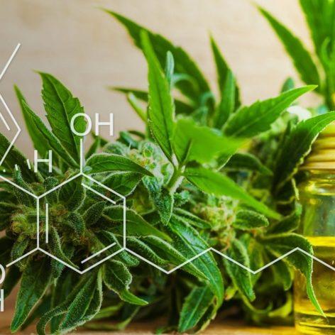 pourquoi cannabis est cher