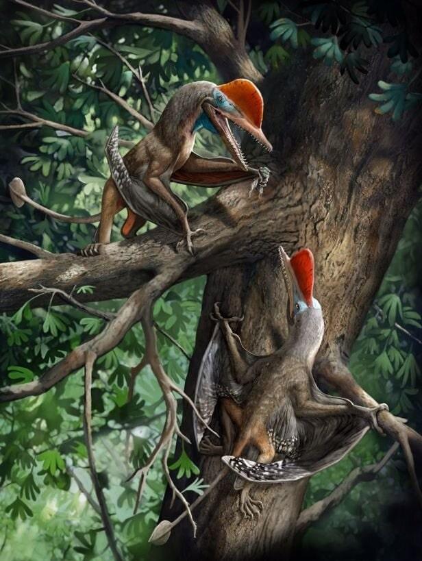 pterosaure vie arboricole