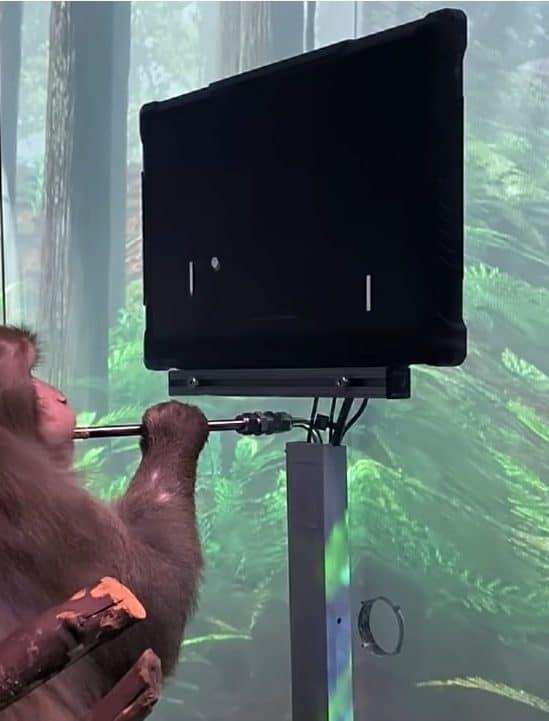 video neuralink montre singe jouant pong via esprit