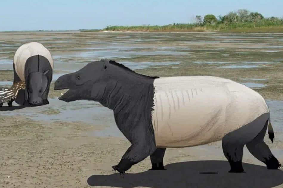 58 millions annees mammiferes frequentaient environnement marins