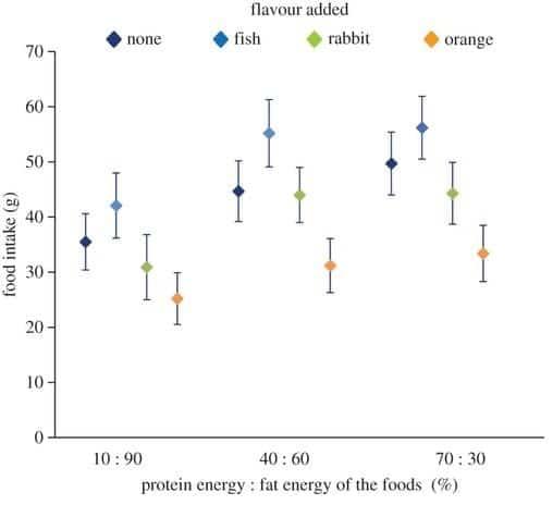 graphique nourriture chat ratio