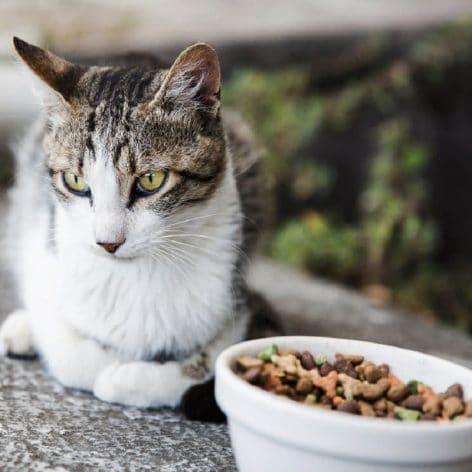 pourquoi chats sont difficiles avec nourriture