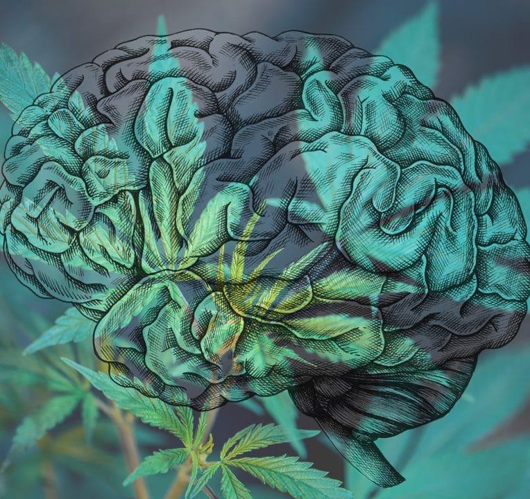 premier essai clinique cannabis traitement migraine en cours