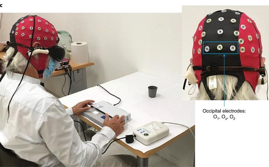 protocole experimental activite cerebral optogenetique