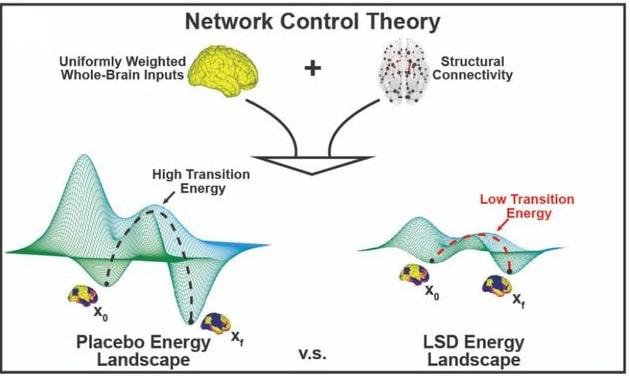 schema energie cerveau lsd