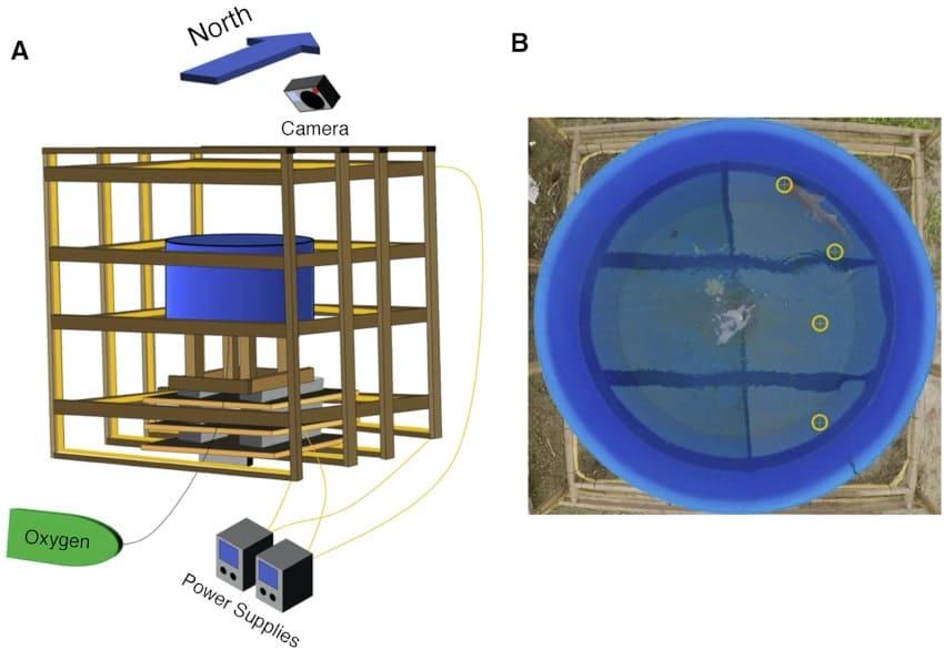expérience requins champs magnétiques
