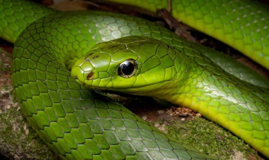 serpents peuvent ils entendre