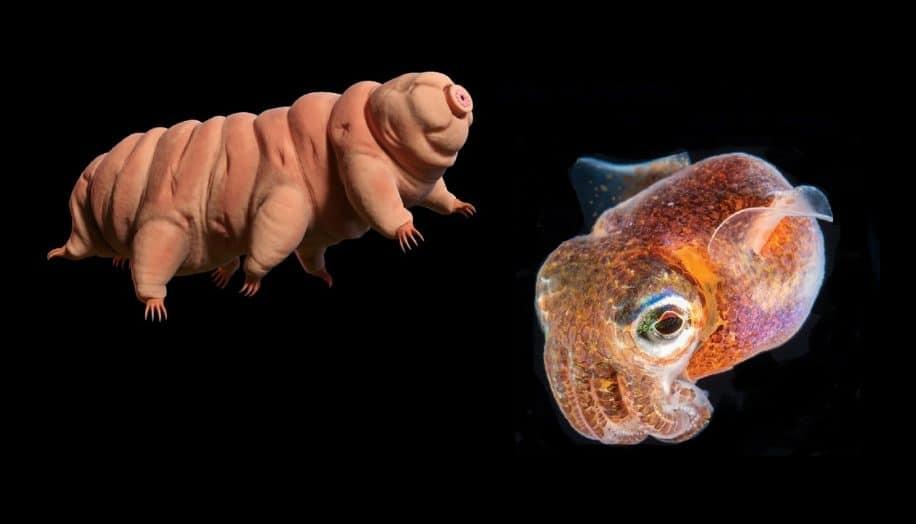 tardigrades bebes calmars rejoindront bientot iss