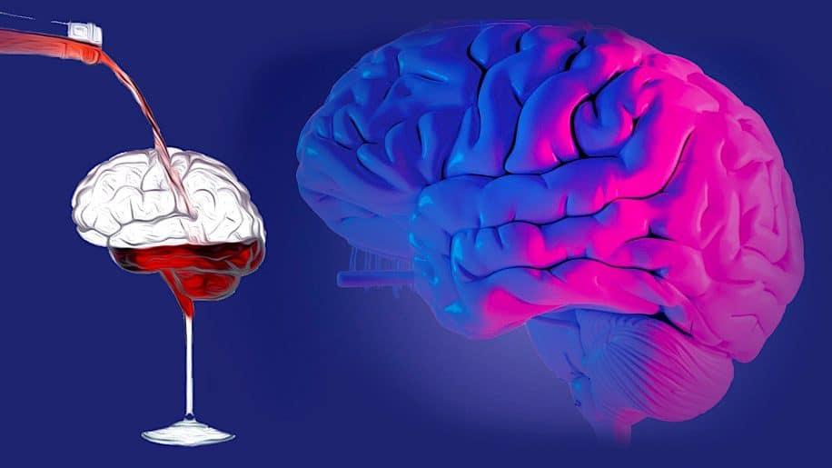 toute consommation alcool nocive pour cerveau selon etude