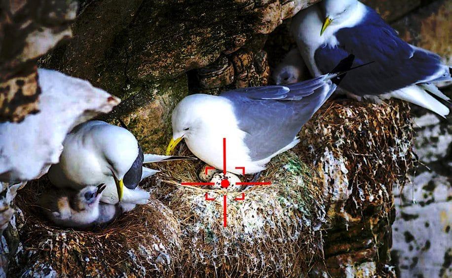 us navy developpe drones pour exterminer oeufs oiseaux pres aeroports