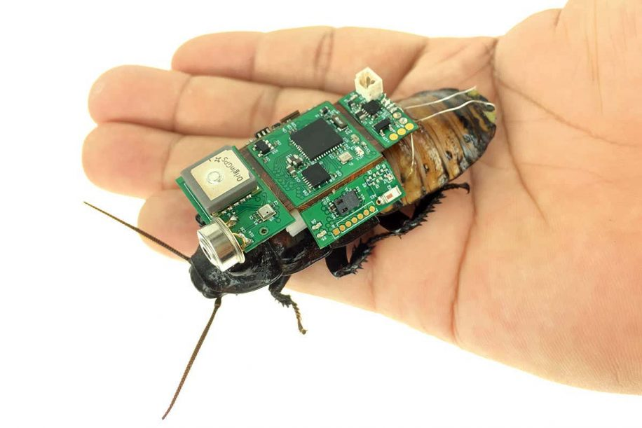 cafard cyborg camera peut etre dirige a distance