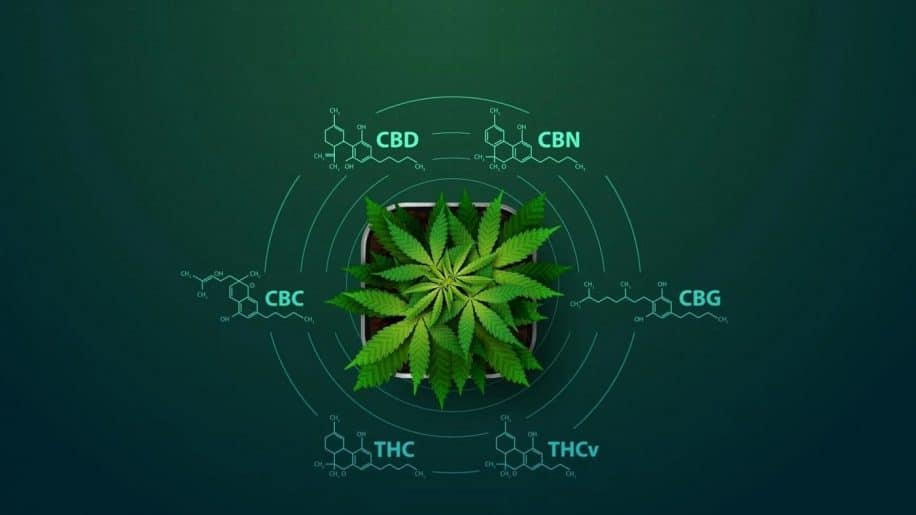 cannabinoides effets potentiels corps