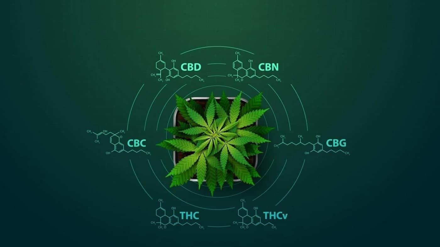 Les cannabinoïdes et leurs effets potentiels sur le corps