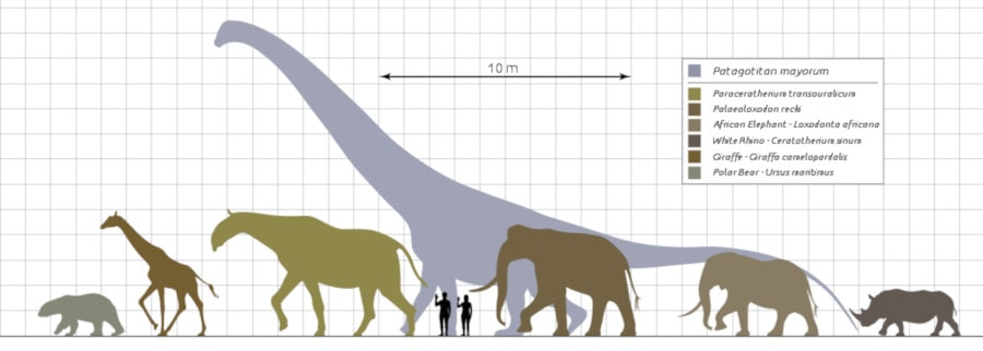 comparaison taille mammifères