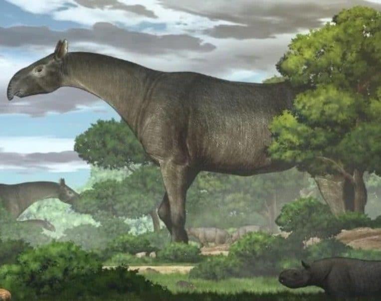 découverte fossile rhinocéros géant
