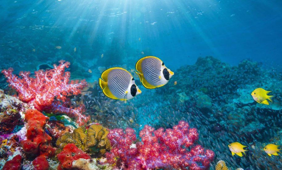 effondrement ecosysteme oceanique pourrait menacer humanite 25ans