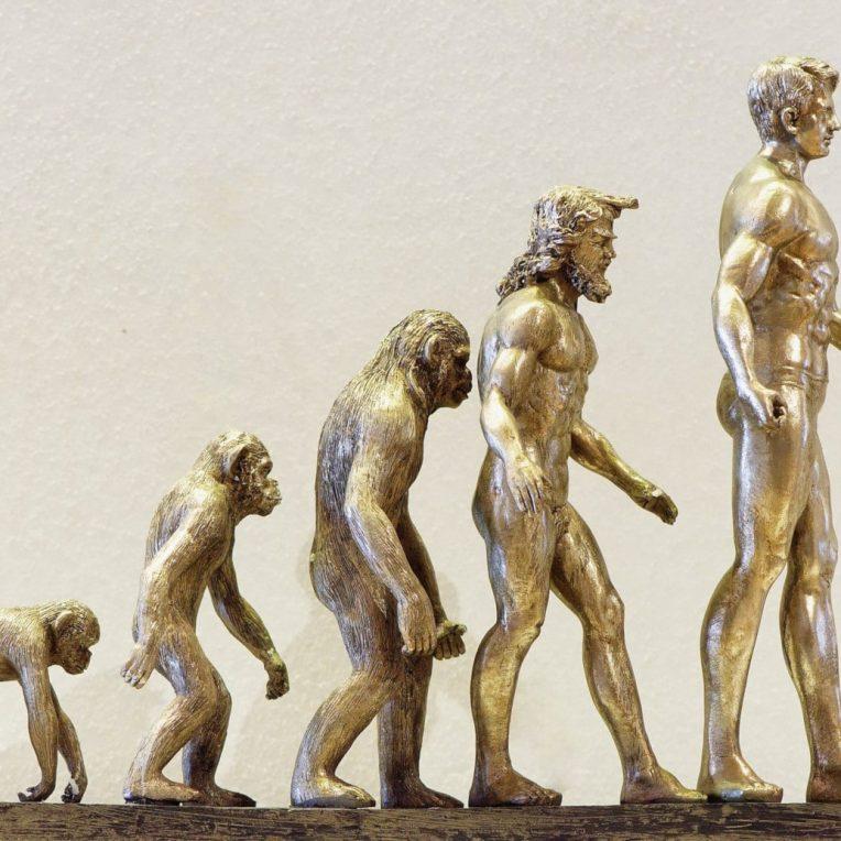 évolution homme culture
