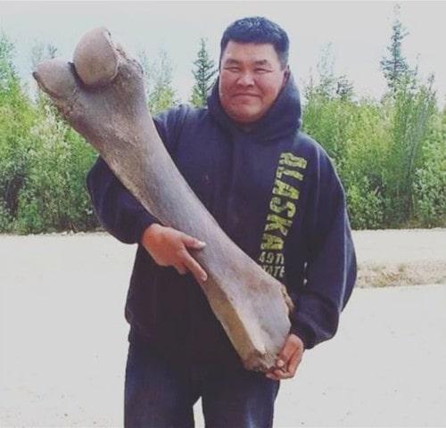 fémur mammouth laineux 2016