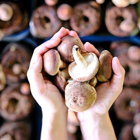 manger deux champignons par jour reduirait pres moitie risque cancer
