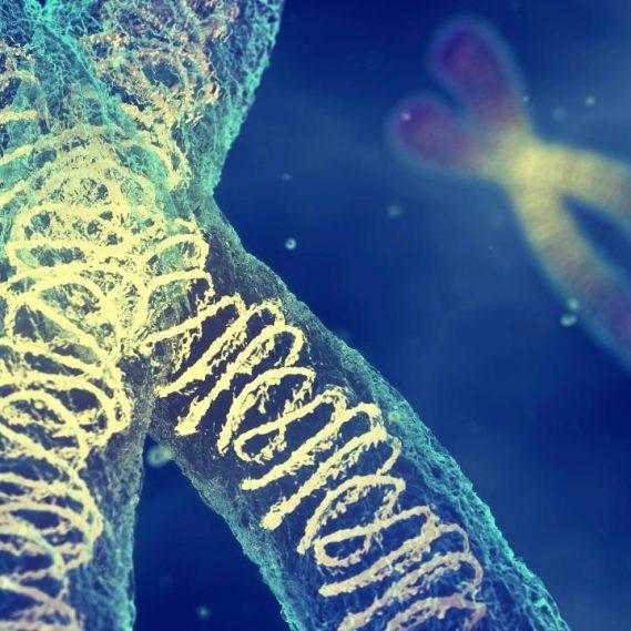 masse chromosome humain mesuree premiere fois