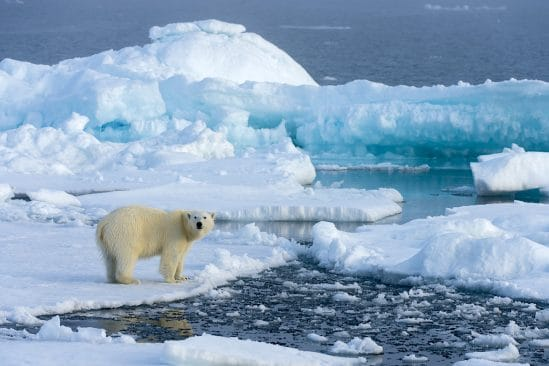 partie banquise arctique s amincit deux fois plus vite que prevu