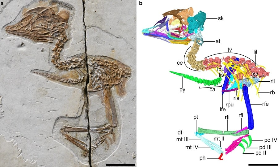 photo fossile oiseau dinosaure