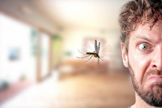 pourquoi moustiques bourdonnent pres oreilles