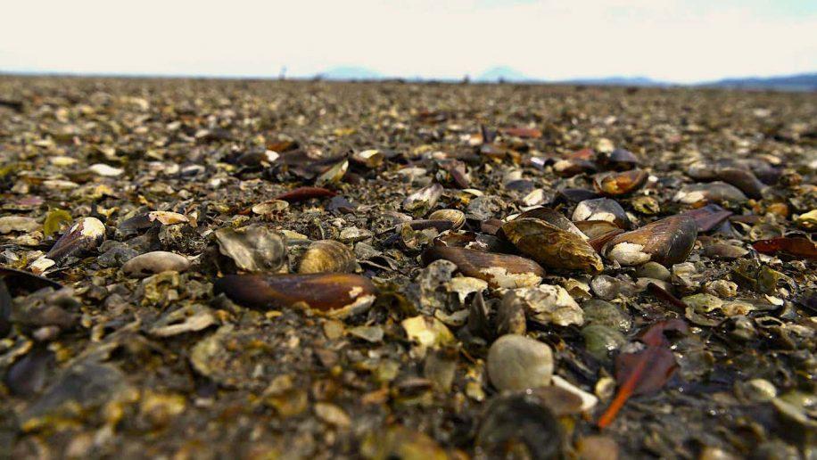 1 milliard creatures-marines cuites mort durant vague chaleur nord-ouest pacifique