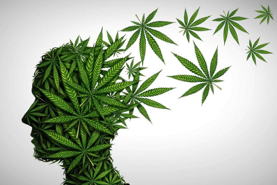 cas schizophrenie lies consommation cannabis augmentation