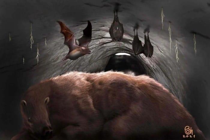 chauve-souris paresseux taniere
