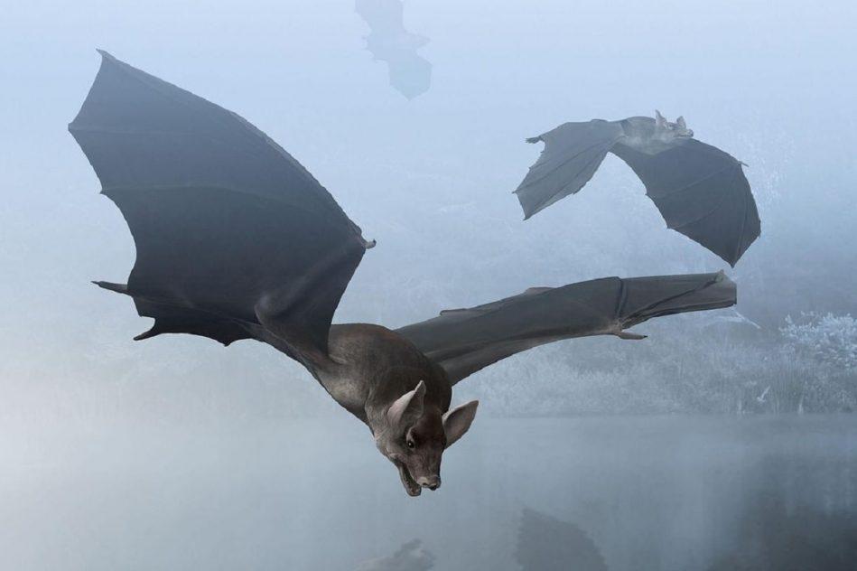 decouverte fossile chauve-souris vampire geante vieux 100000 ans argentine