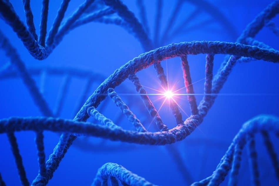 decouverte rare variation genetique reduisant risque obesite