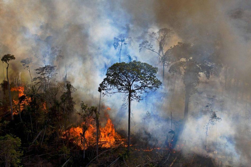 grande partie amazonie emet plus co2 absorbe