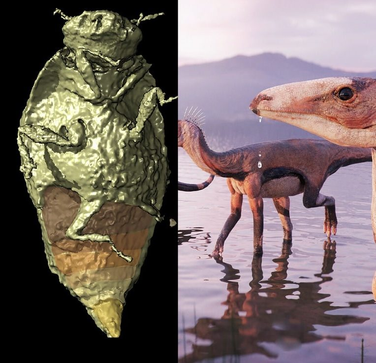 insectes fossilises trias retrouves execrement dinosaures