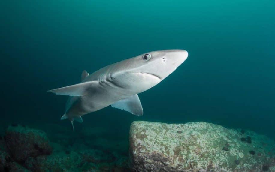 intestin spirale requins fonctionne valve nikola tesla