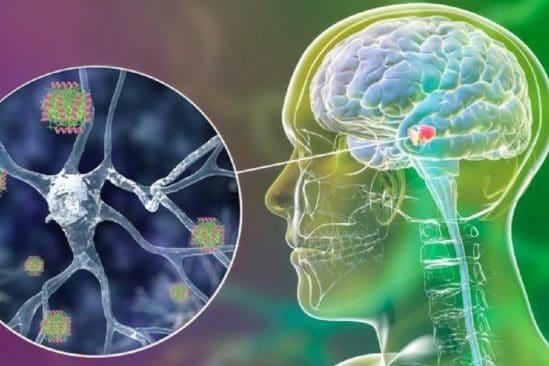 molecule humaine empeche activite toxique proteine maladie parkinson