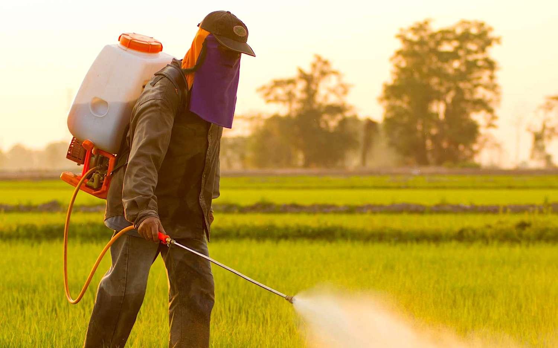 Des pesticides responsables de lésions cérébrales chez les enfants