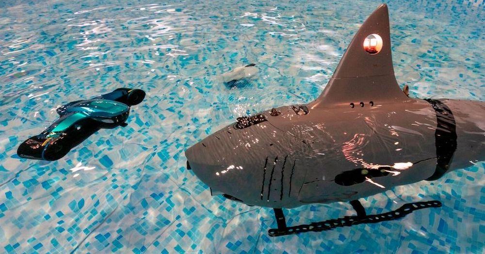 robo-shark test piscine