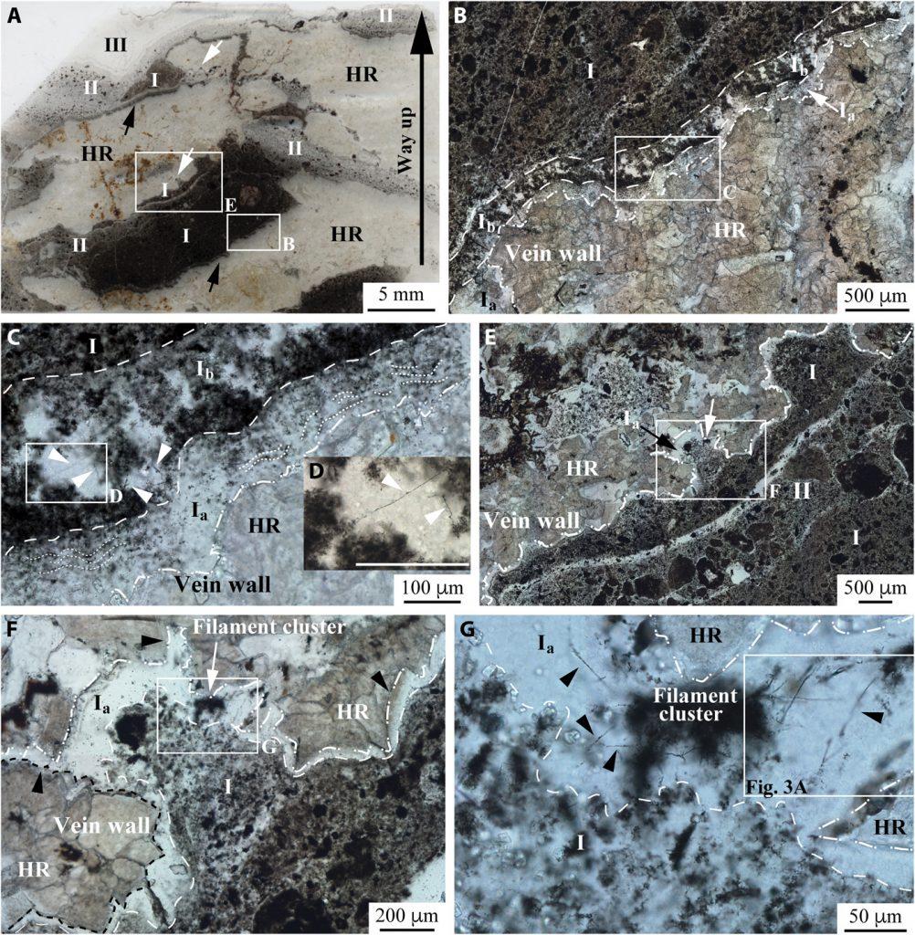 scan echantillon fossile archees filaments 3 milliards annees